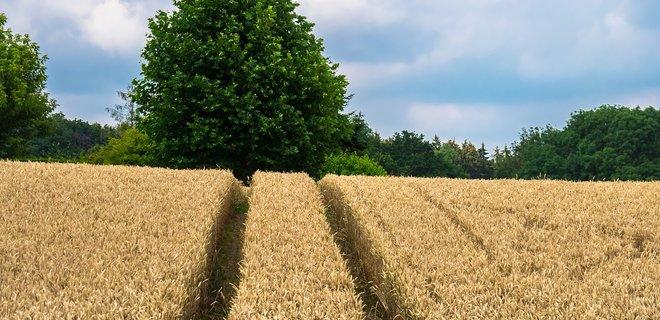 Чи можливо придбати землю сільськогосподарського призначення