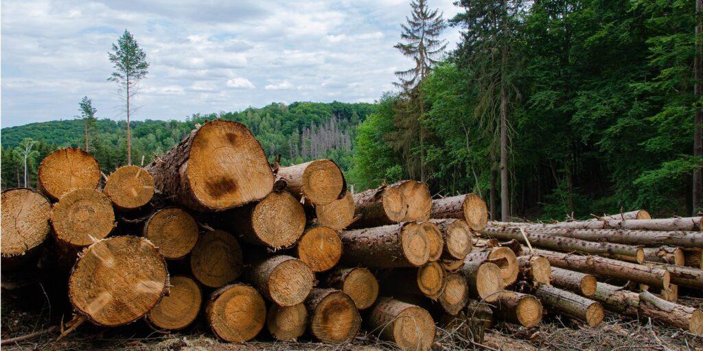 Як зручно та вигідно придбати деревину